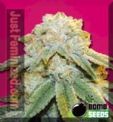 Buy Bubble Bomb female skunk seeds for sale cheap online